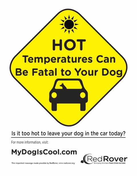Hot Temperatures Can be Fatal to Your Dog